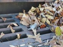 被风化的叶子 库存图片