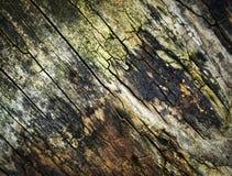 被风化的和腐烂的树干 免版税库存照片