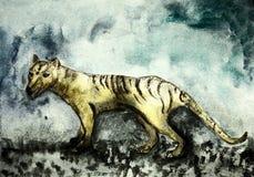 被风化的塔斯马尼亚的老虎 皇族释放例证
