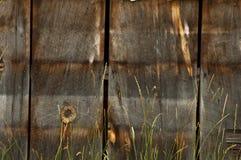 被风化的木头 图库摄影
