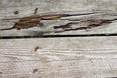 被风化的木板条细节 库存照片