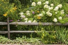 被风化的木篱芭和花 库存照片