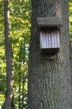 被风化的木鸟舍在森林 免版税库存图片