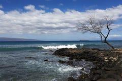 被风化的树,毛伊,夏威夷 图库摄影