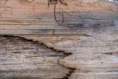 被风化的漂流木头Closup -背景 免版税库存照片