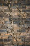 被风化的砖老工厂藤墙壁 免版税库存照片