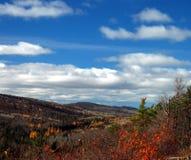 被风化的秋天叶子 图库摄影