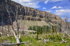 被风化的美国五针松森林/石灰石峭壁 免版税库存照片