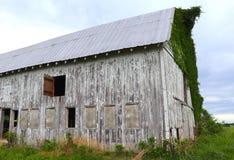 被风化的老谷仓特写镜头有生长对此的常春藤的 免版税库存照片