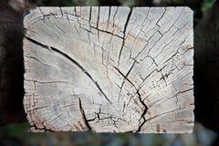 被风化的腐朽的铁路结构树 库存照片
