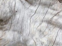 被风化的自然木头 库存图片