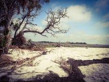 被风化的结构树 库存图片