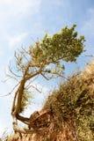 被风吹树和海滩侵蚀 库存照片
