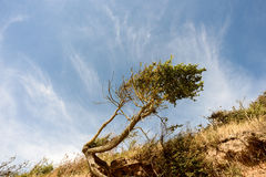 被风吹树和海滩侵蚀 库存图片