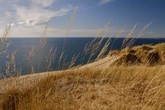 被风吹沙丘的草 免版税库存图片