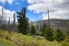 被骚扰的树,在湖Laka, Šumava,捷克附近的树木丛生,多小山风景 免版税库存照片