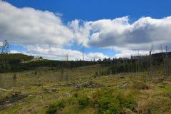 被骚扰的树,在湖Laka, Šumava,捷克附近的树木丛生,多小山风景 图库摄影