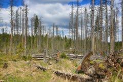 被骚扰的树,在湖Laka, Šumava,捷克附近的树木丛生,多小山风景 库存照片