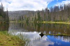 被骚扰的树,多小山风景,湖Laka, Šumava,捷克 库存照片