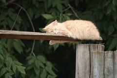 被鼻插入的小猫 库存图片