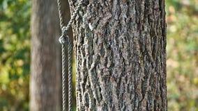 被系住的树 图库摄影