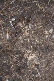 被刻凹痕的老腐烂的树干 库存照片