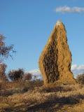 被破坏的房子,在Matjiesfontein附近,伟大的南部非洲的干旱台地高原,南非 库存图片