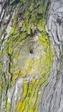 被钻孔的树 免版税图库摄影