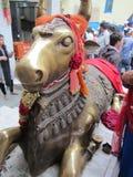 被崇拜的宗教母牛 免版税库存图片