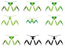 被说明的螳螂 免版税库存图片