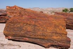 被结晶的木头注册化石森林国家公园, Arizon 免版税库存图片