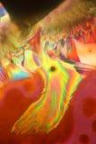 被结晶的维生素C 库存图片