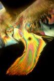 被结晶的维生素C 库存照片