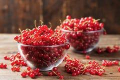 被洗涤的红浆果 库存照片