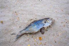 被洗涤的鱼 免版税图库摄影
