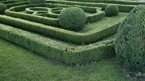 被整理的黄杨木潜叶虫灌木绿色迷宫  库存照片
