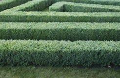 被整理的黄杨木潜叶虫灌木绿色迷宫  免版税库存照片
