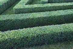 被整理的黄杨木潜叶虫灌木绿色迷宫  免版税库存图片