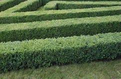 被整理的黄杨木潜叶虫灌木绿色迷宫  库存图片