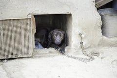 被滥用的狗 免版税库存图片