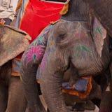 被绘的大象 库存照片
