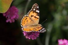 被绘的夫人Butterfly的特写镜头 库存图片