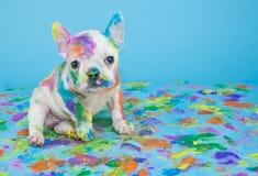 被绘的小狗 库存图片