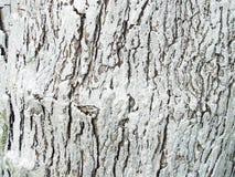 被绘的木树 免版税库存图片