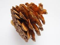 被绘的棕色颜色杉木锥体 图库摄影