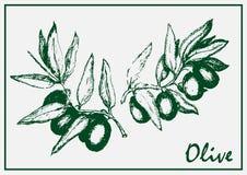 被绘的橄榄树枝 免版税库存图片