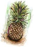 被绘的菠萝 库存图片