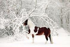 被绘的马在一个多雪的森林里 免版税图库摄影