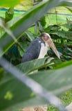 被绘的鹳在动物园里 免版税库存照片