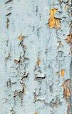 被绘的破旧的木头 免版税库存图片